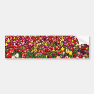 Field of multicolored tulips bumper sticker