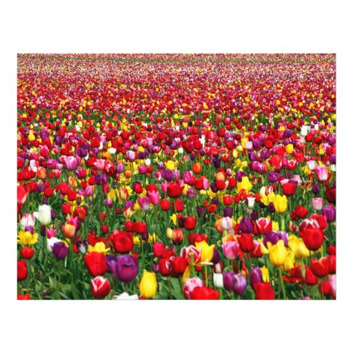 Field of multicolored tulips full color flyer