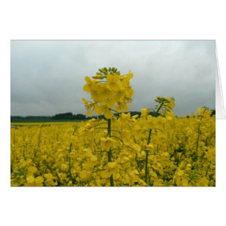 Field Of Oilseed Rape Greeting Cards