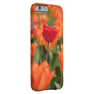 Field of poppies barely there iPhone 6 case