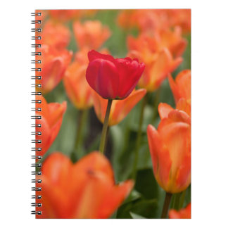 Field of poppies note book