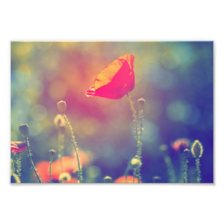Field of poppies photo print