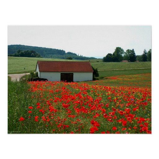 Field of poppies posters