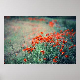 Field of Poppies | Print