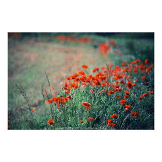 Field of Poppies | Print