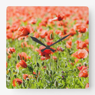 Field of poppies square wall clock