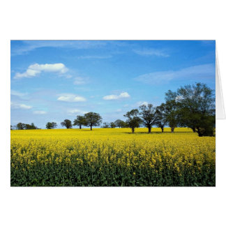 Field of rape, Surrey, England Greeting Card
