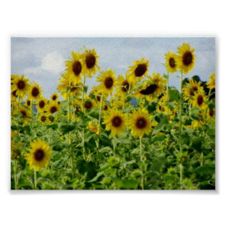 Field of Sunflowers #2 Poster