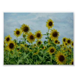 Field of Sunflowers #3 Poster