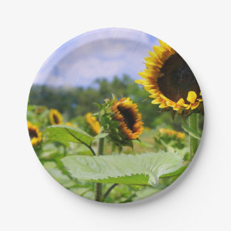 Field of Sunflowers 7 Inch Paper Plate