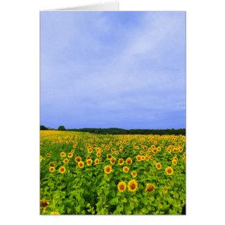 Field of Sunflowers Card