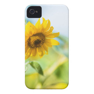 Field of Sunflowers iPhone 4 Cover