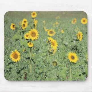 Field of Sunflowers Mouse Pad