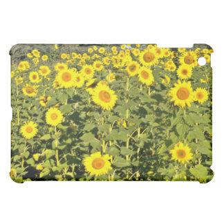 Field of Sunflowers Pink flowers iPad Mini Cases