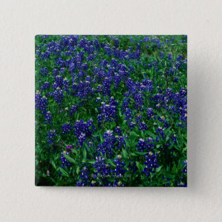 Field of Texas Bluebonnets 15 Cm Square Badge