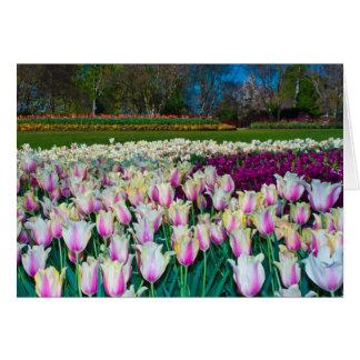 Field of Tulips Card