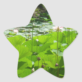 Field of Water Lilies Star Stickers