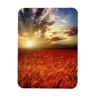 Field of wheat and sunset rectangular photo magnet