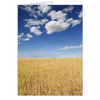 Field of wheat card