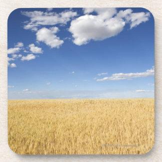 Field of wheat drink coaster