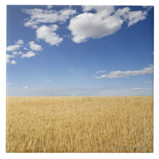 Field of wheat large square tile