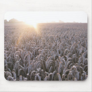 Field of Wheat Mouse Pad