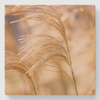 Field of Wheat Sandstone Coaster