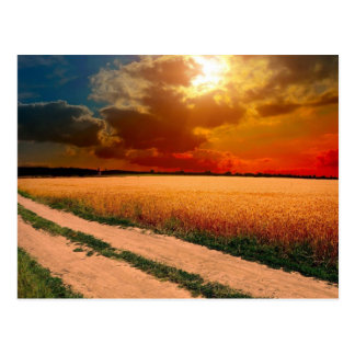 Field of Wheat with a Dirt Road Postcard