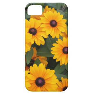Field of yellow daisies iPhone 5 covers