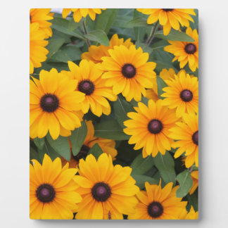 Field of yellow daisies plaque