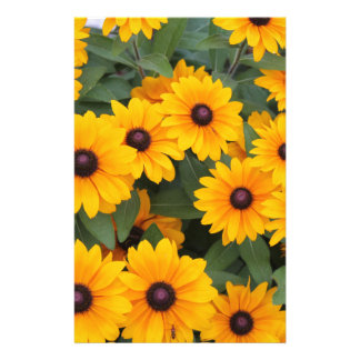 Field of yellow daisies stationery