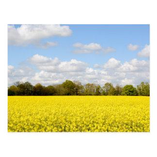 Field of yellow rapeseed postcard