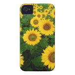Field of Yellow Sunflowers Case-Mate iPhone 4 Case