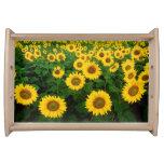 Field of Yellow Sunflowers Flowers