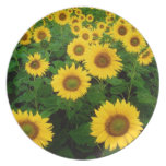Field of Yellow Sunflowers Party Plate