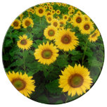 Field of Yellow Sunflowers Porcelain Plate