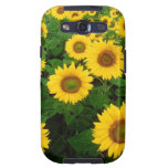 Field of Yellow Sunflowers Samsung Galaxy S3 Cases