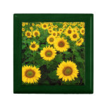 Field of Yellow Sunflowers Trinket Boxes