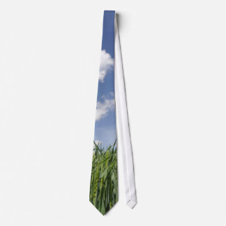 Field of young corn tie