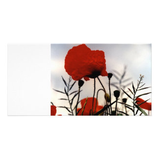 Field Poppies Picture Card