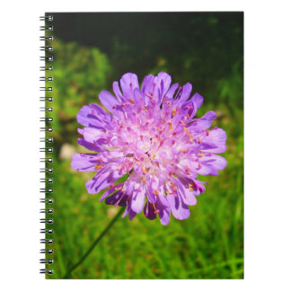 Field Scabious Spiral Photo Notebook