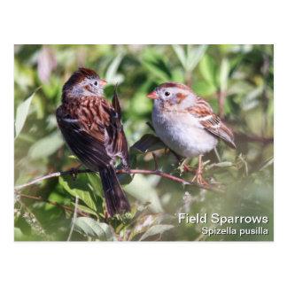 Field Sparrow Postcard