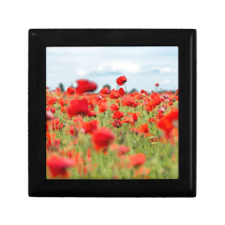 Field with red papavers gift box