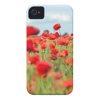 Field with red papavers iPhone 4 cover
