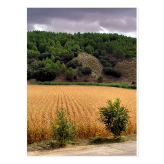 Fields of culture in Valdelaguna, Madrid Postcard