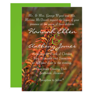 Fields of  glowing orange Agave invite