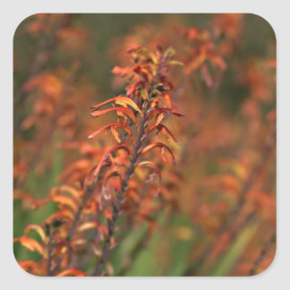 Fields of Orange Agave Square Sticker