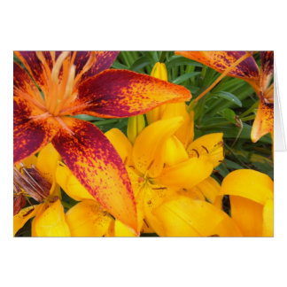Fiery Asiatic Lilies Greeting Card