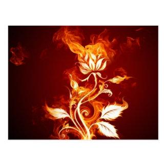 Fiery Flower Art Postcard