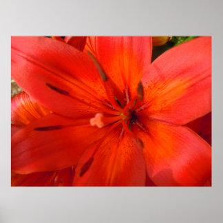 Fiery Orange & Red Lily II Poster